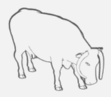 Hawksmoor Heifer