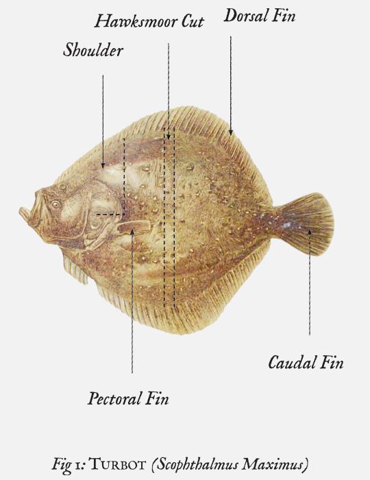 Seafood_side_03